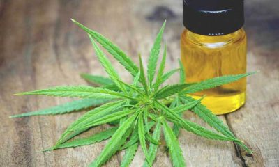 Vape CBD Oil for Hemp Extract Oil Benefits