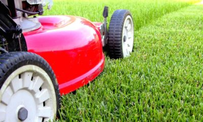 5 Important Things to Know When Running a Business in the Lawn Care Industry