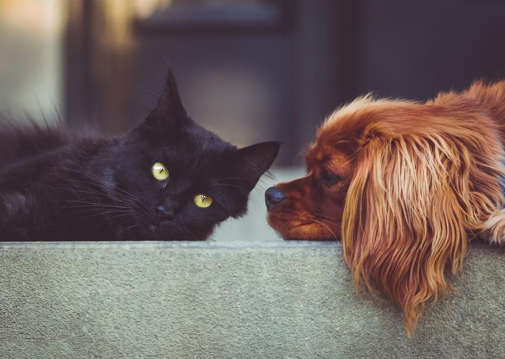 Reigning Cats and Dogs: the Rise of Pet Tech