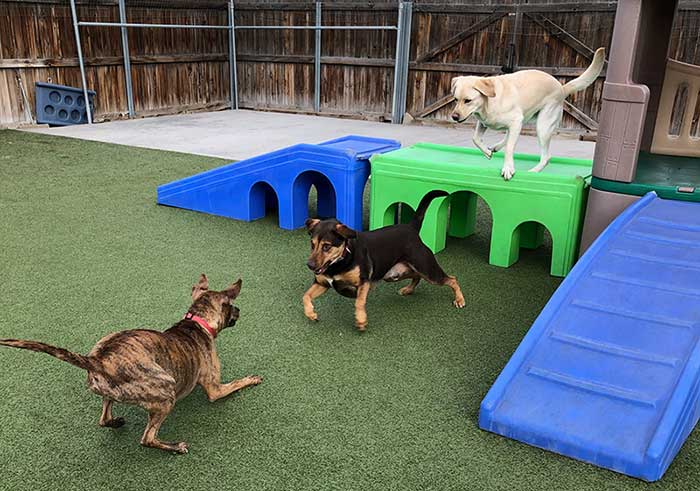 7 tips for getting ready for dog daycare in Edmonton
