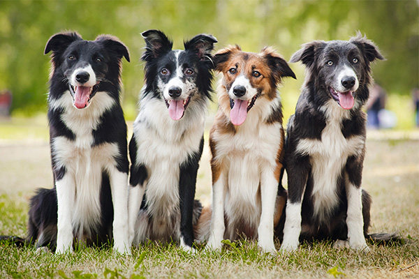 Choose The Best Options for Dog Kennels at Your Services