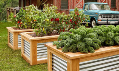 8 Advantages of Raised Garden Beds For Urban Gardeners